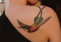 Colourful hummingbird flight on shoulder